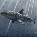 """Great White Study, oil on canvas, 16x20"""", 2020 SOLD"""