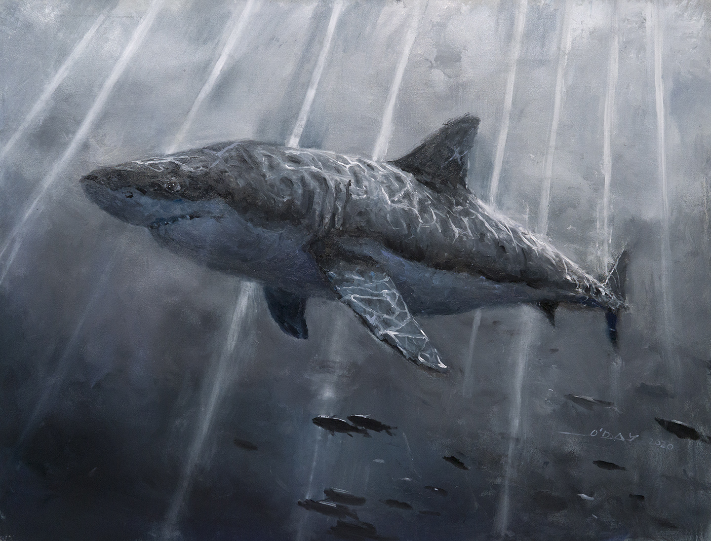 """Great White, oil on canvas, 48x60"""", 2020 SOLD"""